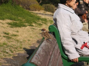 A スズメ (Sparrow) was sitting on the bench next to us.