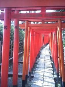 Over a hundred of Torii Gates at 根津神社 (Nezu Shrine).