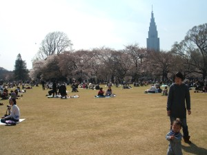 There were many people enjoying 花見 (Cherry Blossom Viewing) today.