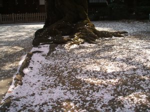 You can see the falling petals in this picture too!