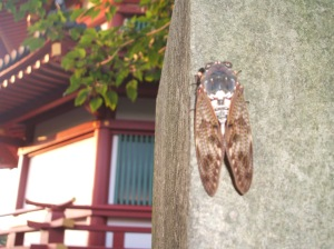 Cicada in front of Ueno's Toshogu Shrine.