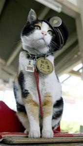 Tama the feline station-master