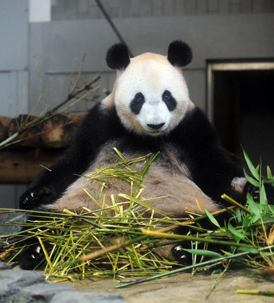 panda | Tokyo Five