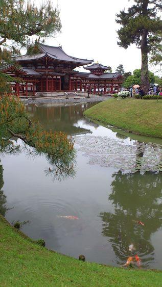 鯉 (carp) in the pond at Byoudo-in.